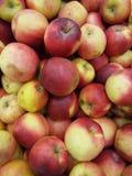 κόκκινα μήλα Idared Στοκ Εικόνες