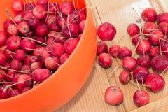 Κόκκινα μίνι μήλα & x28 καβούρι apple& x29  Στοκ φωτογραφίες με δικαίωμα ελεύθερης χρήσης