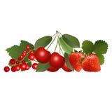Κόκκινα μούρα με τα φύλλα Στοκ εικόνες με δικαίωμα ελεύθερης χρήσης