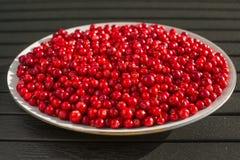 Κόκκινα μούρα σε ένα άσπρο πιάτο στοκ εικόνες