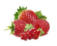 Κόκκινα μούρα, σταφίδα, σμέουρο, φράουλα που απομονώνεται Στοκ εικόνα με δικαίωμα ελεύθερης χρήσης