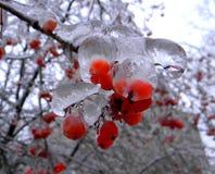 Κόκκινα μούρα στην αιχμαλωσία πάγου Στοκ Εικόνες