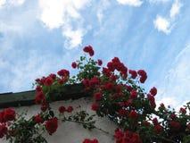 Κόκκινα λουλούδια για τα Δελτία Στοκ Φωτογραφίες