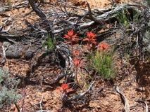 Κόκκινα λουλούδια ερήμων Στοκ φωτογραφία με δικαίωμα ελεύθερης χρήσης