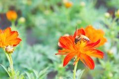 Κόκκινα λουλούδια και έντομα στο πάρκο Στοκ Φωτογραφία