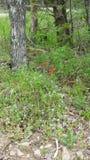 Κόκκινα λουλούδια και μπλε στοκ φωτογραφίες με δικαίωμα ελεύθερης χρήσης