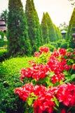 Κόκκινα λουλούδια και πράσινα δέντρα σε έναν τροπικό κήπο, Ταϊλάνδη Στοκ Φωτογραφία