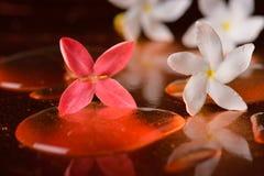 Κόκκινα λουλούδια και σταγονίδια στην επιφάνεια του χαλκού Στοκ Εικόνες
