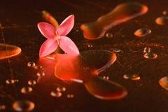 Κόκκινα λουλούδια και σταγονίδια στην επιφάνεια του χαλκού Στοκ Φωτογραφία