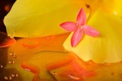 Κόκκινα λουλούδια και σταγονίδια στην επιφάνεια του χαλκού Στοκ Εικόνα