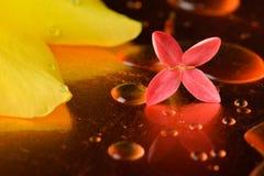 Κόκκινα λουλούδια και σταγονίδια στην επιφάνεια του χαλκού Στοκ φωτογραφίες με δικαίωμα ελεύθερης χρήσης