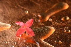 Κόκκινα λουλούδια και σταγονίδια στην επιφάνεια του χαλκού Στοκ φωτογραφία με δικαίωμα ελεύθερης χρήσης