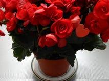Κόκκινα λουλούδια με την κόκκινη καρδιά μέσα Στοκ Εικόνες