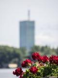 Κόκκινα λουλούδια με τον ουρανοξύστη Στοκ φωτογραφία με δικαίωμα ελεύθερης χρήσης