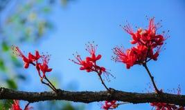 Κόκκινα λουλούδια με το σαφή ουρανό στοκ εικόνα με δικαίωμα ελεύθερης χρήσης