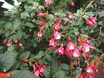 Κόκκινα λουλούδια σε ένα υπόβαθρο δέντρων Στοκ εικόνα με δικαίωμα ελεύθερης χρήσης
