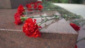 Κόκκινα λουλούδια σε μια ταφόπετρα απόθεμα βίντεο