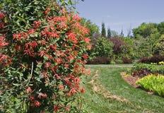 Κόκκινα λουλούδια στο βοτανικό κήπο στοκ φωτογραφία με δικαίωμα ελεύθερης χρήσης