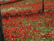 Κόκκινα λουλούδια στο νότιο Ισραήλ Στοκ εικόνα με δικαίωμα ελεύθερης χρήσης