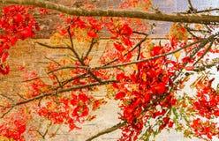 Κόκκινα λουλούδια στο ξύλινο υπόβαθρο Στοκ φωτογραφία με δικαίωμα ελεύθερης χρήσης