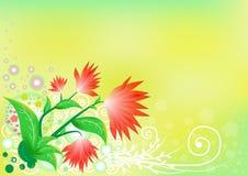 Κόκκινα λουλούδια στο πράσινο υπόβαθρο Στοκ Φωτογραφία