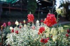 Κόκκινα λουλούδια στο τροπικό δάσος Στοκ εικόνα με δικαίωμα ελεύθερης χρήσης