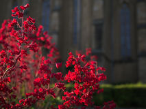 Κόκκινα λουλούδια στο Keszthely, Ουγγαρία Στοκ Εικόνες