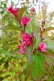 Κόκκινα λουλούδια φθινοπώρου Στοκ Φωτογραφία