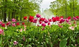 Κόκκινα λουλούδια Στοκ εικόνα με δικαίωμα ελεύθερης χρήσης