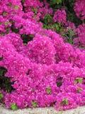 Κόκκινα λουλούδια Στοκ εικόνες με δικαίωμα ελεύθερης χρήσης