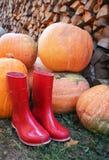 Κόκκινα παπούτσια βροχής κολοκύθας φθινοπώρου και ξύλινος με το υπόβαθρο leavs Στοκ Φωτογραφίες