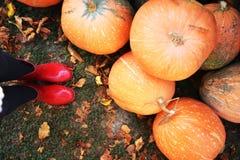 Κόκκινα παπούτσια βροχής κολοκύθας φθινοπώρου και ξύλινος με το υπόβαθρο leavs Στοκ Φωτογραφία