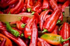 Κόκκινα πιπέρια Στοκ εικόνα με δικαίωμα ελεύθερης χρήσης