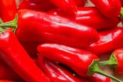 Κόκκινα πιπέρι & x27 τσίλι καψικό annuum& x27  Στοκ Εικόνες