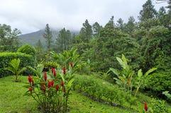 Κόκκινα πιπερόριζα και Arenal ηφαίστειο, Κόστα Ρίκα Στοκ φωτογραφία με δικαίωμα ελεύθερης χρήσης