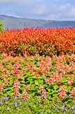 Κόκκινα & πορτοκαλιά φύλλα Στοκ φωτογραφία με δικαίωμα ελεύθερης χρήσης