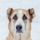 Κόκκινα ρολόγια σκυλιών Στοκ εικόνες με δικαίωμα ελεύθερης χρήσης