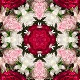 Κόκκινα, ρόδινα και άσπρα peony λουλούδια Στοκ Φωτογραφία
