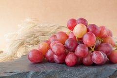 κόκκινα σταφύλια με τα υπόβαθρα φύσης, υπόβαθρα φρούτων Στοκ Εικόνες