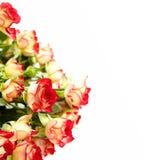 κόκκινα τριαντάφυλλα δεσμών Στοκ εικόνες με δικαίωμα ελεύθερης χρήσης