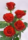 κόκκινα τριαντάφυλλα δε&si Στοκ φωτογραφίες με δικαίωμα ελεύθερης χρήσης