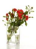 κόκκινα τριαντάφυλλα δε&si Στοκ εικόνα με δικαίωμα ελεύθερης χρήσης