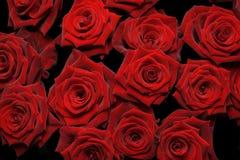 κόκκινα τριαντάφυλλα δε&si Στοκ Εικόνες