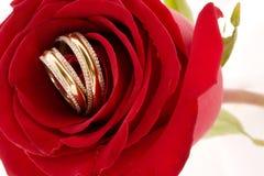 κόκκινα τριαντάφυλλα δύο & Στοκ Εικόνα