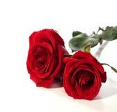 κόκκινα τριαντάφυλλα δύο Στοκ Εικόνα