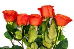Κόκκινα τριαντάφυλλα και πράσινοι μίσχοι με τα φύλλα σε ένα άσπρο υπόβαθρο Τα λουλούδια κλείνουν επάνω Ρομαντική ευχετήρια κάρτα  στοκ φωτογραφία