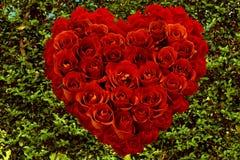 Κόκκινα τριαντάφυλλα που διαμορφώνονται ως καρδιά τα πράσινα φύλλα στοκ φωτογραφία με δικαίωμα ελεύθερης χρήσης