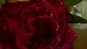 Κόκκινα τριαντάφυλλα σε μια ανθοδέσμη λουλουδιών νυφών απόθεμα βίντεο