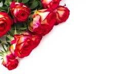 Κόκκινα τριαντάφυλλα στο άσπρο υπόβαθρο με το διάστημα αντιγράφων Στοκ Εικόνα