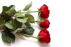 κόκκινα τριαντάφυλλα τρία Στοκ εικόνες με δικαίωμα ελεύθερης χρήσης